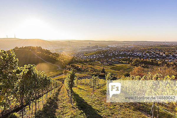 Germany  Baden-Wuerttemberg  Stuttgart  view over grapevines to Untertuerkheim and Bad Cannstatt against the sun