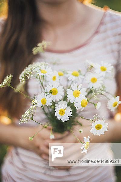 Frau hält einen Strauß gepflückter weißer Wildblumen  Nahaufnahme