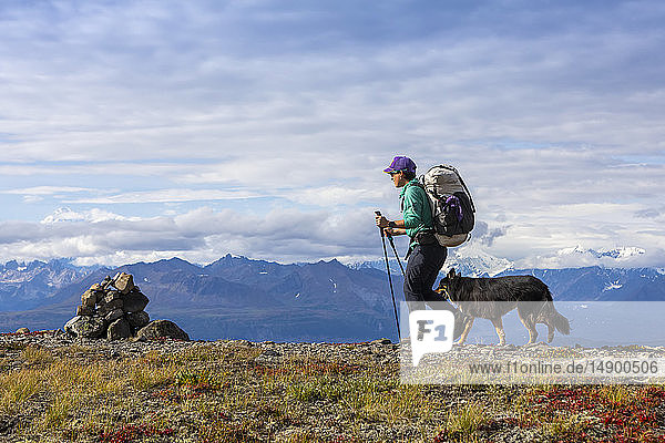 Woman and her dog backpacking on the tundra approaching a rock cairn along the Kesugi Ridge Trail  Denali State Park  Alaska with the Alaska Range in the background  South-central Alaska; Alaska  United States of America