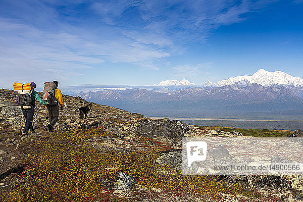 Woman and man backpacking with their dog on the tundra on a sunny autumn day along the Kesugi Ridge Trail  Denali State Park  Alaska with Denali and the Alaska Range as the backdrop  South-central Alaska; Alaska  United States of America