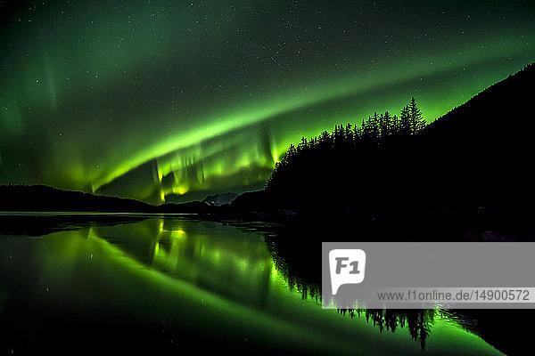Green Northern lights  Tongass National Forest  near Juneau  Southeast Alaska; Alaska  United States of America