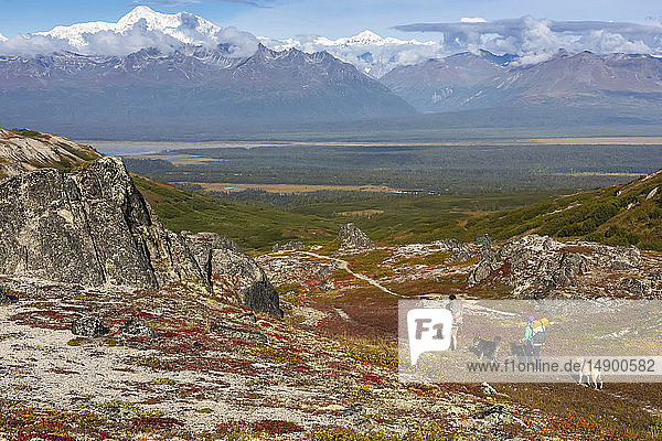 Woman and man backpacking on the tundra with their dogs along the Kesugi Ridge Trail  Denali State Park  on a sunny autumn day  with Denali and the Alaska Range as the backdrop  South-central Alaska; Alaska  United States of America