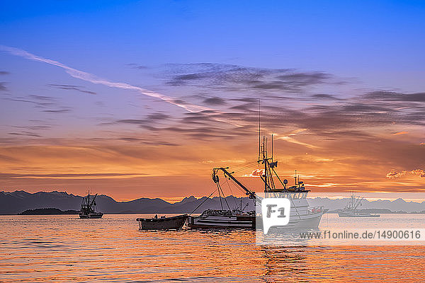 Seiners anchored in Amalga Harbor at sunset awaiting a commercial salmon opening; Juneau  Alaska  United States of America