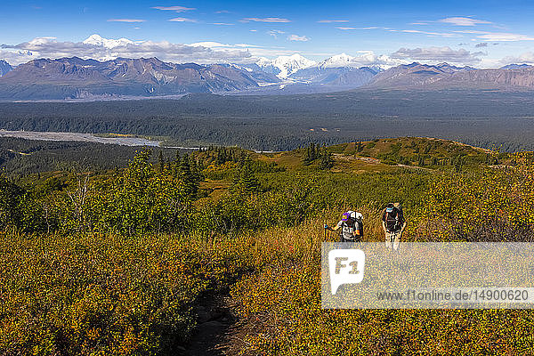 Woman and man backpacking up the Kesugi Ridge trail in the autumn  with Denali and the Alaska Range in the background  Southcentral Alaska; Alaska  United States of America