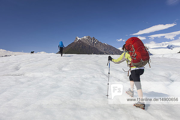 Couple and their dog backpacking across the Root Glacier with crampons on during summer towards Donoho Peak  Wrangell Mountains  Wrangell-St. Elias National Park  South-central Alaska; Kennicott  Alaska  United States of America
