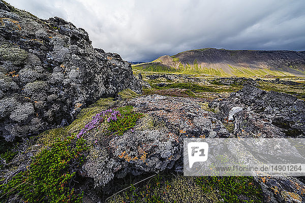 Moss covered lava fields with mountains in the distance on the Snaefellsness Peninsula; Iceland
