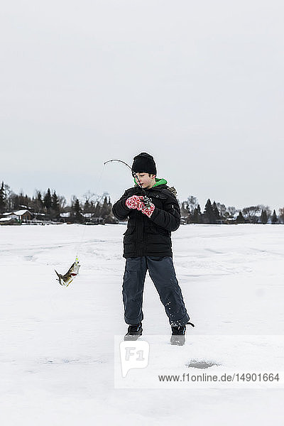 A young boy catching a Walleye while ice fishing on Lake Wabamum during a winter family outing; Wabamun  Alberta  Canada
