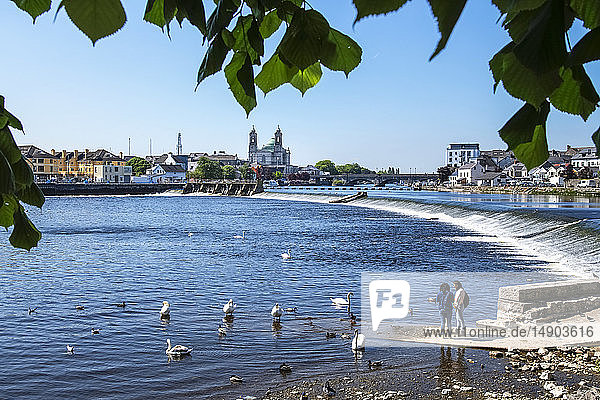 Young women standing down at the water's edge of the River Shannon feeding the swans  Church of Saints Peter and Paul seen in the distance; Athlone  County Westmeath  Ireland