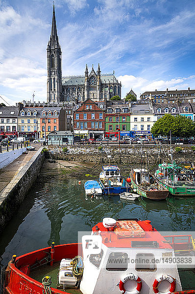 Boat racing with boats moored in the harbour and St. Colman's Cathedral in the background; Cobh  County Cork  Ireland
