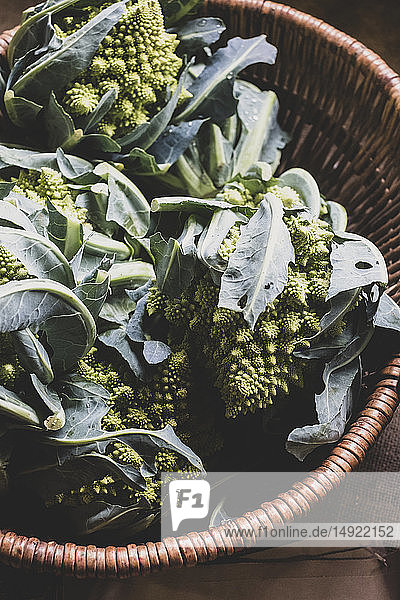 High angle close up of freshly harvested green Romanesco cauliflowers in wicker basket.