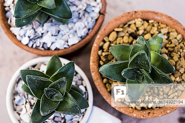 Hochwinkel-Nahaufnahme von Sukkulenten  die in Terrakotta-Töpfen in Kies gepflanzt wurden.