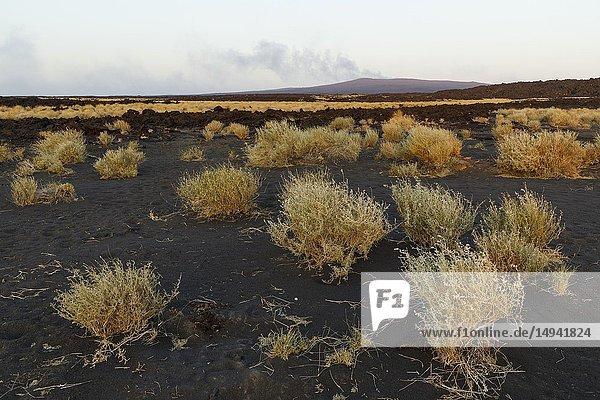 Erta Ale volcano in Danakil Depression desert in Ethiopia. Africa.
