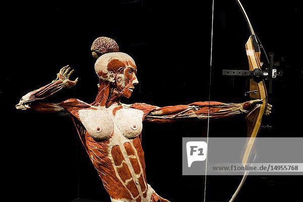 An archer at a Body World exhibition in Berlin,  Germany.