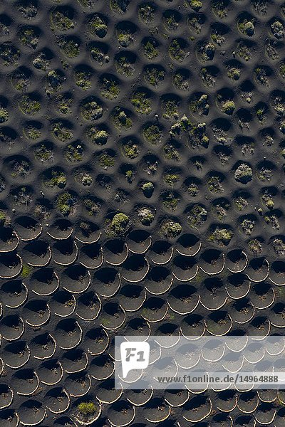 Vineyards,  Landscape Volcanic,  La Geria,  Lanzarote Island,  Canary Islands,  Spain,  Europe.