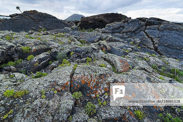 Bejeque  Lava field and lichens   La Geria  Lanzarote Island  Canary Islands  Spain  Europe.