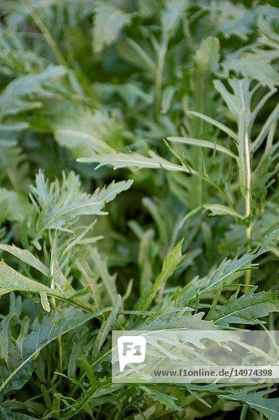 Fresh leafy greens