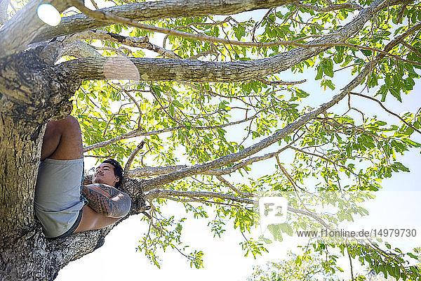 Mann entspannt sich auf Baum  Pagudpud  Ilocos Norte  Philippinen