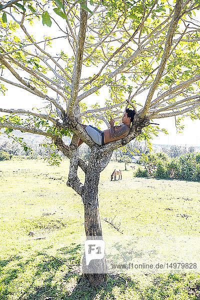 Mann mit Smartphone am Baum  Pagudpud  Ilocos Norte  Philippinen