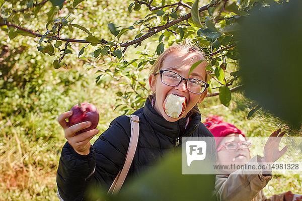 Mädchen  die Äpfel vom Baum pflücken und essen