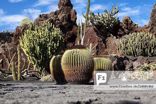 The cactus garden project of César Manrique. Guatiza  Lanzarote. Spagna.