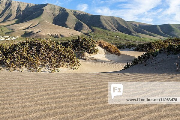 Features sand dunes of the bay. Famara  Lanzarote. Spain.