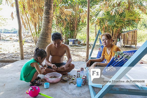 Family eating freshly caught whelks  seafood  outside their home at Bai Vung Ban beach  Phu Quoc Island  Vietnam  Asia.