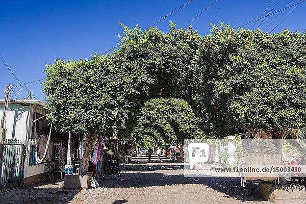 Arbors shading the historic downtown center of Loreto. Loreto  Baja California Sur  Mexico.