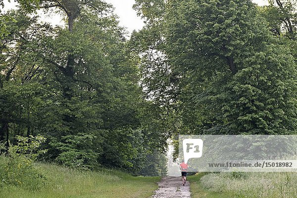 Jogger on a path in the Park of the Chateau of Rambouillet  Forest of Rambouillet  Haute Vallee de Chevreuse Regional Natural Park  Yvelines department  Ile-de-France region  France  Europe.