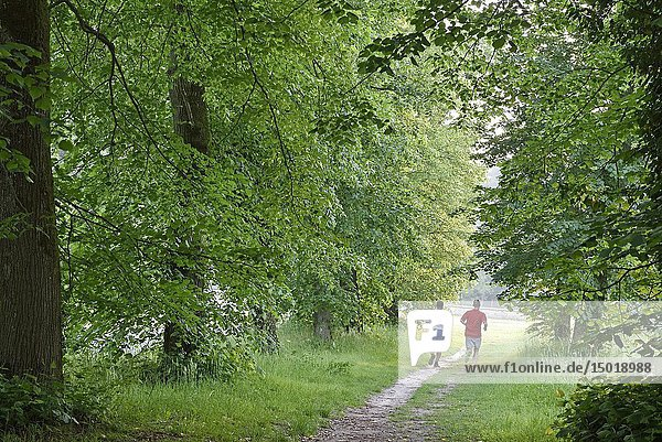 Joggers on a path in the Park of the Chateau of Rambouillet  Forest of Rambouillet  Haute Vallee de Chevreuse Regional Natural Park  Yvelines department  Ile-de-France region  France  Europe.