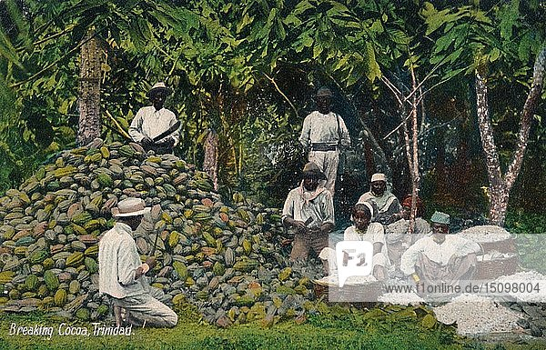 'Breaking Cocoa  Trinidad'  early 20th century. Creator: Unknown.