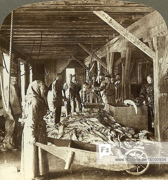 'Receiving fish from sea vessels and packing for export - fish warehouse  Aalesund  Norway'  c1905. Creator: Unknown.