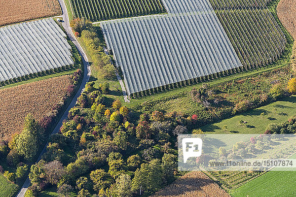 Germany  Baden-Wuerrttemberg  Lake Constance  Markdorf  orchards at the outskirts  aerial view