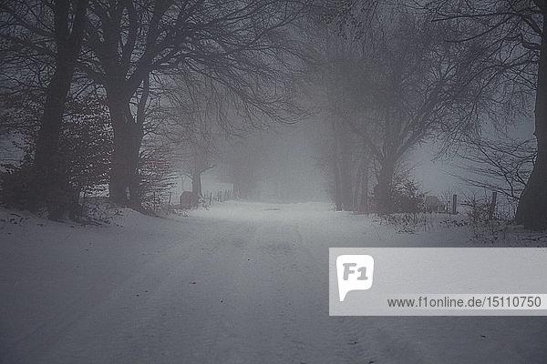Schneebedeckter Weg im Winter  Eifel  Deutschland