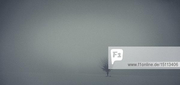 Einzelner Baum in dunstiger Winterlandschaft