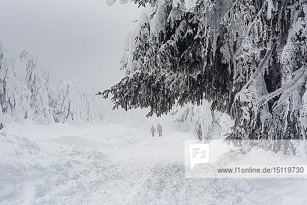 Two hikers at winter landscape  Arbermandel  Ore Mountains  Germany