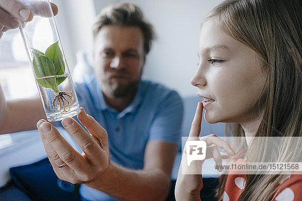 Mädchen zu Hause betrachtet Pflanze in einem von ihrem Vater gehaltenen Glas