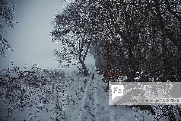 Panzersperren des Zweiten Weltkriegs im Winter  Siegfriedlinie  Eifel  Deutschland
