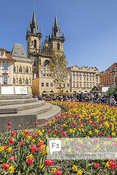 Staromestske namesti (Old Town Square) and Our Lady before Tyn Church in spring  UNESCO World Heritage Site  Prague  Bohemia  Czech Republic  Europe
