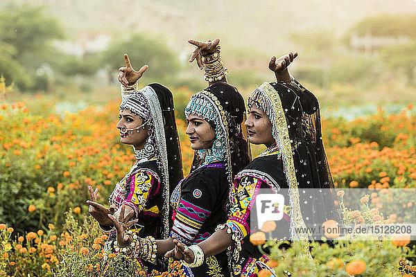 Local dancers in a marigold farm in Pushkar  Rajasthan  India  Asia