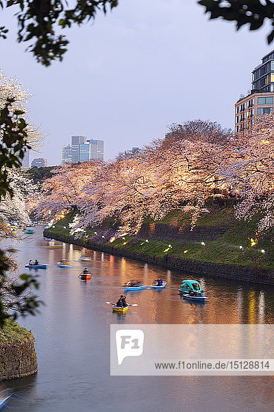 Spring cherry blossom  Chidorigafuchi  Chiyoda ku  Tokyo  Japan  Asia