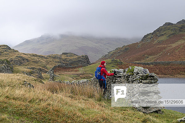 A woman hiking near Grasmere stops by a dry stone Lakeland wall beside Alcock Tarn  Lake Distirct National Park  UNESCO World Heritage Site  Cumbria  England  United Kingdom  Europe