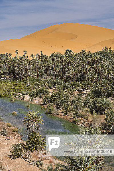 View over the Oasis of Taghit  western Algeria  North Africa  Africa