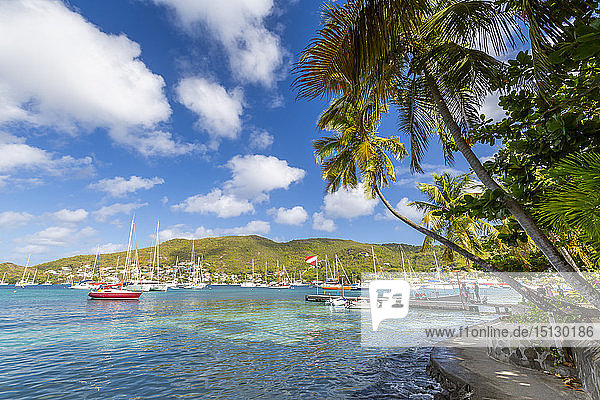 Boats in Port Elizabeth  Admiralty Bay  Bequia  The Grenadines  St. Vincent and the Grenadines  Windward Islands  West Indies  Caribbean  Central America