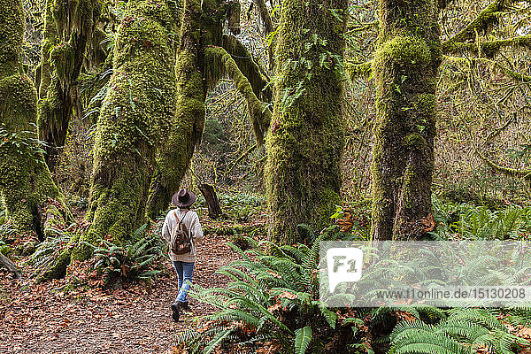 Hall of Mosses rainforest  Olympic National Park  UNESCO World Heritage Site  Washington State  United States of America  North America