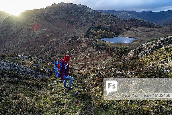 A woman hiking from Lingmoor Fell descends to Blea Tarn and Great Langdale in the Lake Distirct National Park  UNESCO World Heritage Site  Cumbria  England  United Kingdom  Europe
