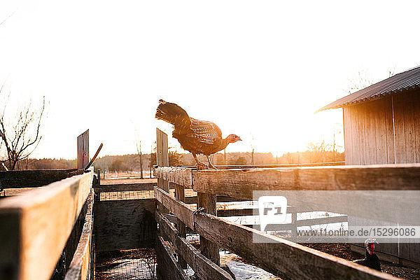 Türkei auf dem sonnenbeschienenen Hofzaun