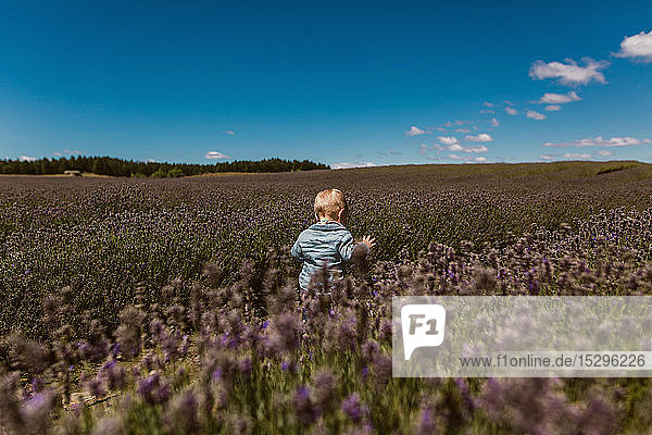 Baby exploring meadow  Wanaka  Taranaki  New Zealand