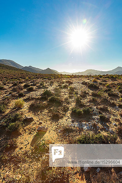 Heißer sonniger Tag im Naturschutzgebiet  Kapstadt  Westkap  Südafrika