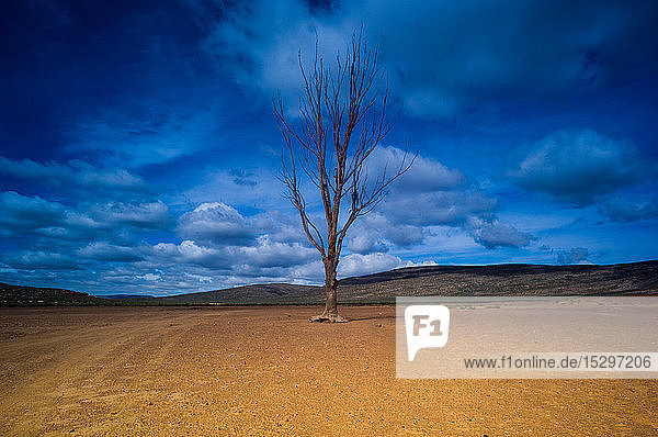 Lone bare tree against blue cloudy sky  Cape Town  Western Cape  South Africa