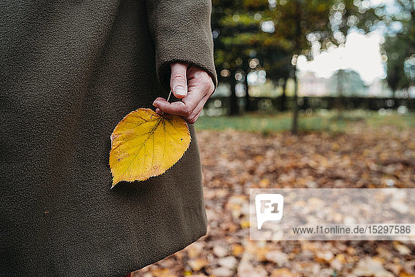 Young woman holding autumn leaf in park  cropped